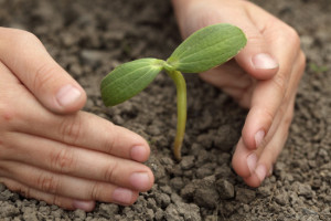 PLANTING-TREE-facebook